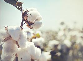 身近な繊維といえば「綿」
